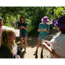 utah wild herb walks